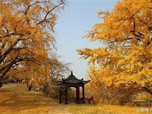 这个秋天,请不要错过秋景网红胜地――大悟与你的约会!