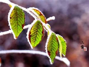 今日小雪:天地初寒,愿�q月安暖!