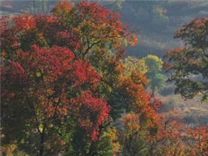 油��般的秋色-----拍�z于大悟。