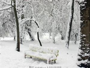 初雪已�l�!�R西平度都安排上了