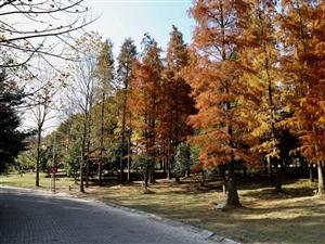 深秋的季�!大悟的美景。
