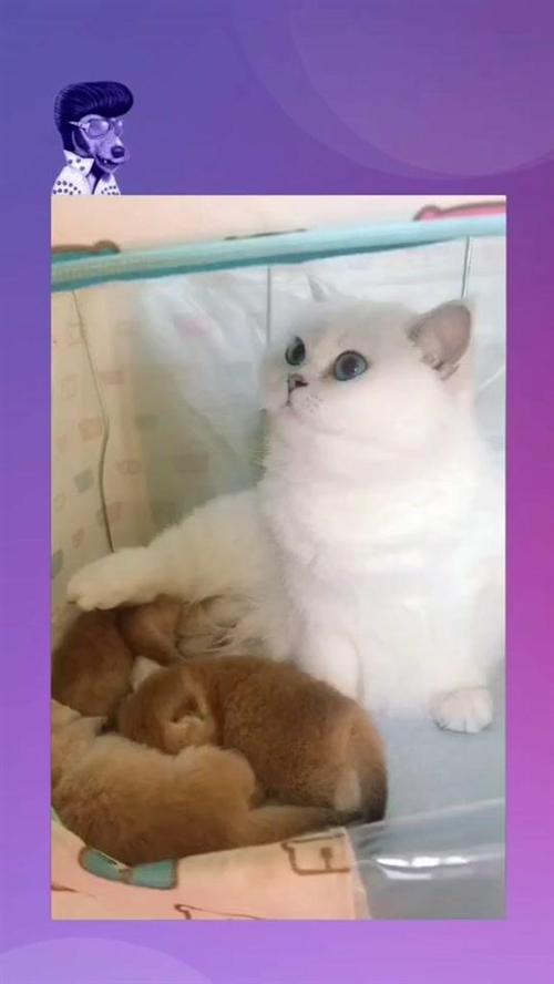 兄Dei喂错了,肤色都不对,没发现吗???????#宠物#喵#猫@抖音小助手