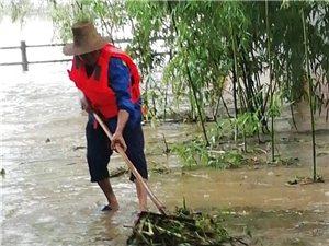 【网友爆料】洪水过后的状元洲