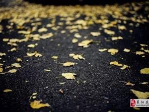 又见秋风吹落叶