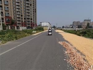 马路晒粮。危害交通