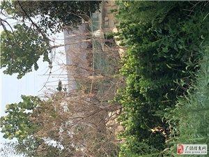 广饶街道前燕村四周被养鸡鸭包围
