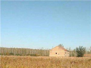 乔庄镇蔡寨村可耕地荒废一年