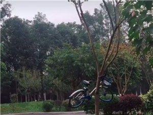 共享单车的哭泣