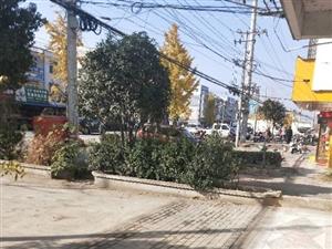 �p港��p港大道�`��`建影�安全