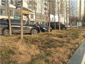 草坪成了停车处