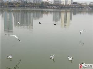 汉江边真美
