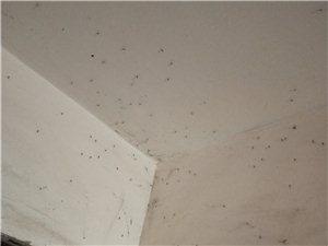 满楼道的蚊子谁来管