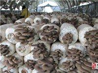 免费处理蘑菇菌包