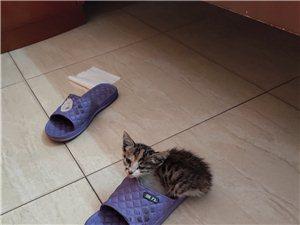 有没有人要小猫咪,超小一只,免费赠送