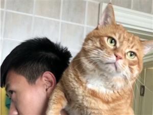 """隔壁老王在""""溜猫"""""""