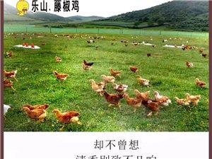 来自四川藤椒之乡??????