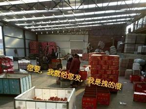 锦信果业,果农联盟,正宗烟台红富士苹果代购代储代销