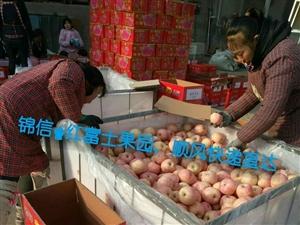 锦信果业,烟台红富士苹果代购、代储,锦信果园直供