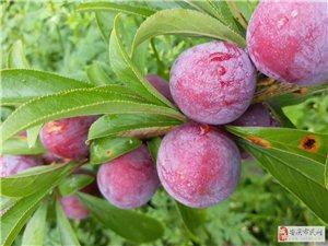 自产自销特色水果微信2268148774