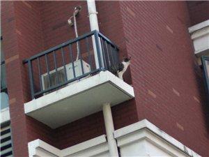 新�A�青年城b20��二�卧�303室。放空�{外�C的地方,一只�咪在上面呆了快一��星期了,好可�z!