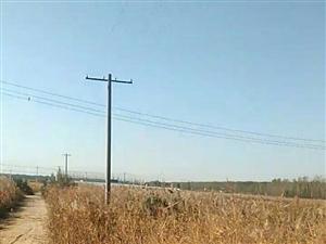 博兴县乔庄镇蔡寨村可耕地荒废一年