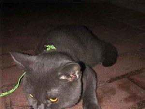 寻猫启示:丢失一只猫,如有好心人拾的请联系,非常感谢!