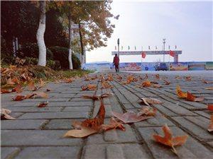 冬日的风,吹落一地的叶。