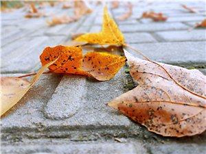 冬日的�L,吹落一地的�~。
