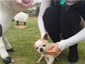 今天在宝贝田园发现一只狗狗,一直跟着,感觉不像流浪狗,是不是走失了