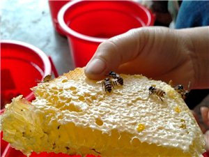 本人有土蜂出售,纯天然今天刚从山上摘回来,县城附近可送货,可讲价。