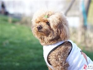 下午在红玺花园拍的一只狗狗,忘了返图了