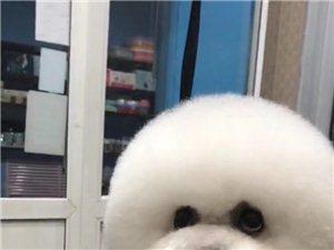 高�尚����物店招生