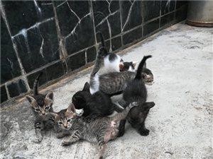 可爱的小猫/老鼠的天敌