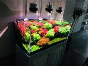 水族馆鱼缸维护