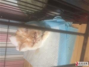 加菲猫淘宝一万五一只