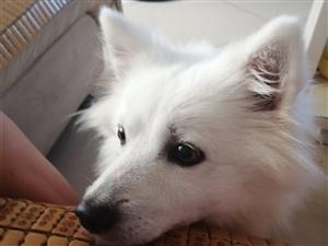 四��月�_摩耶狗狗