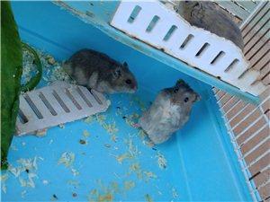 �u�}鼠
