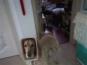 �ふ医鹈�狗狗