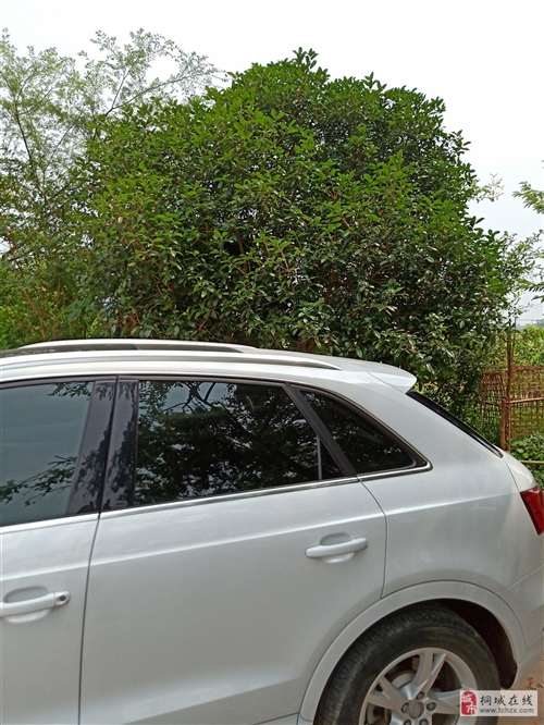 现有桂花树银杏树等树木出售价格面议 树高4米左右树龄10年