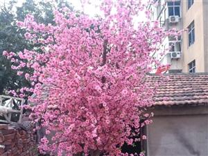 仿真桃花树两颗,单枝200枝,全新低价出售,桃树800一颗,单枝2.5一枝。