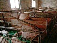 养猪产床便宜出售,买多了没用完,全新