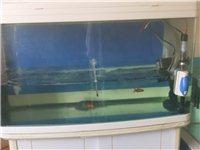 出售一个鱼缸长宽高80x40x50加柜子及所有配件一起出还有鱼一起打包