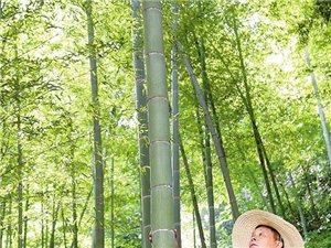 1000亩山林竹林转让,证件齐全,每年政府有补贴,有意者联系,