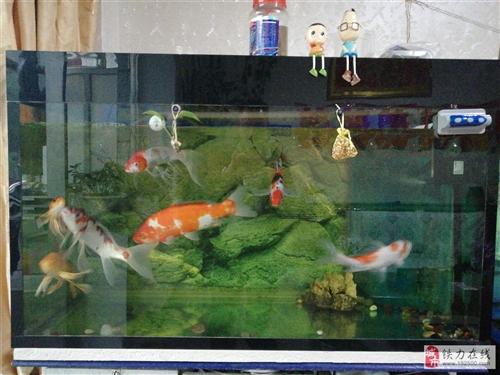 出售鱼缸,价格实惠,喜欢的电话联系13845883588