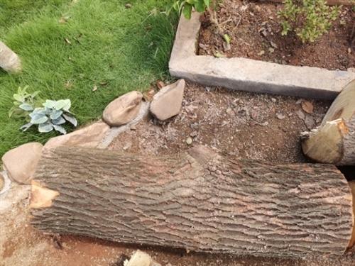 本人有樟树出售,直径20~40公分,可做雕刻及坐凳,有意电联:13543238252