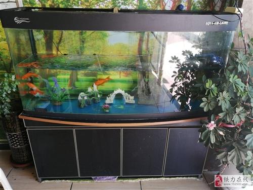 整套鱼缸出售,700元,有意者电话13091766083