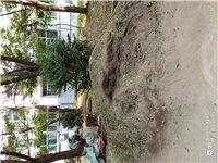 裝修剩下的沙子,便宜處理了,給錢就賣。地址富興小區一號樓五單元,聯系電話13933295128。