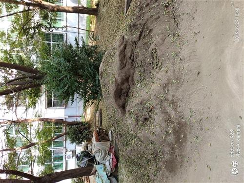 装修剩下的沙子,便宜处理了,给钱就卖。地址富兴小区一号楼五单元,联系电话13933295128。