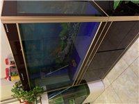 低價出售魚缸,非常板正,隨時可看!150x60cm,99成新,