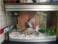 魚缸(75?50)